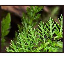 summitry in nature Photographic Print