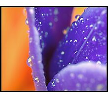 Tulip in the rain 2 Photographic Print