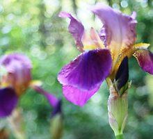 Free-lensing Purple Iris by Chinita128