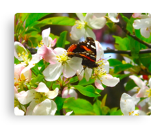 The Darling buds of May Canvas Print