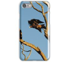 Eagle, Mid-Flight - Wollert, Victoria iPhone Case/Skin