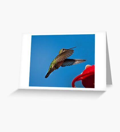 Humming Bird Landing Greeting Card
