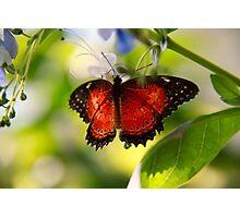 Garden Guest Photographic Print