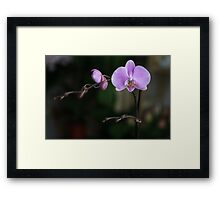 Blue orchid II Framed Print