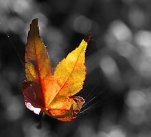 Suspend B'leaf by Clare Colins
