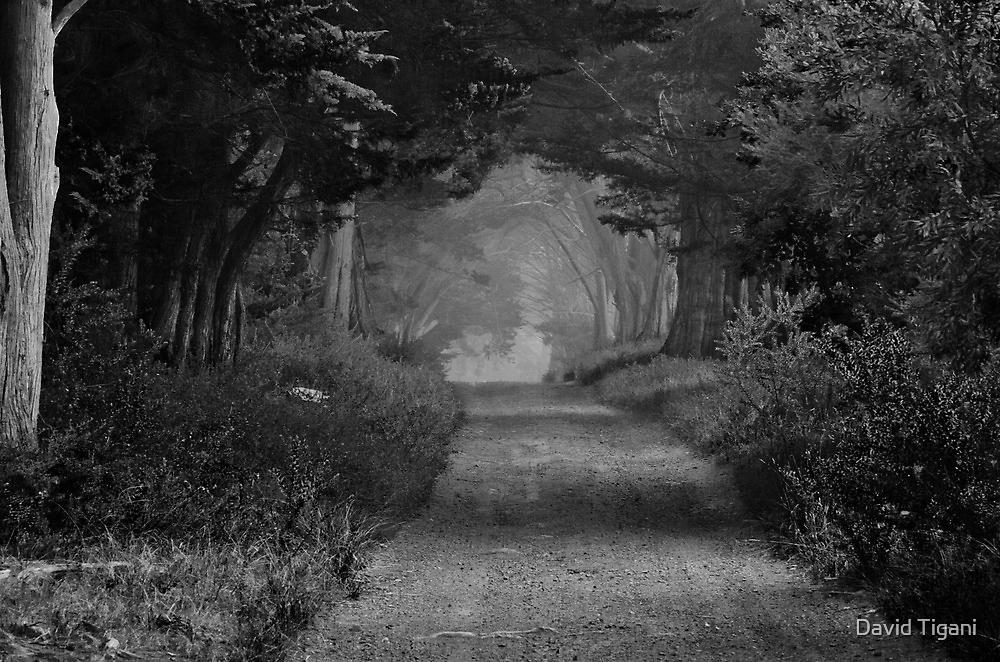 into the fog by David Tigani
