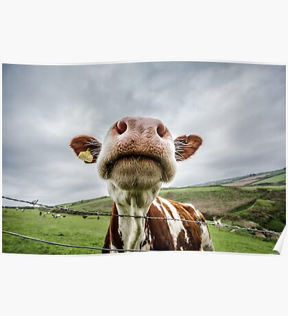 Silly Cow Poster