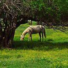 """Sweet Spring"" by Gloria McAfee-Carver"