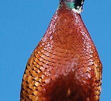 Do You Like My Feathers? by SaffronDunne