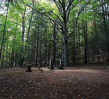 Graveyard at Cataloochee by Bill Shuman