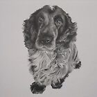 Alfie by Mike O'Connell