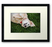 Smile for the Photographer!  Framed Print