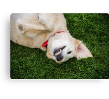 Smile for the Photographer!  Canvas Print