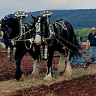 National Horse Ploughing Championship Somerset October 2011 by richard wolfe