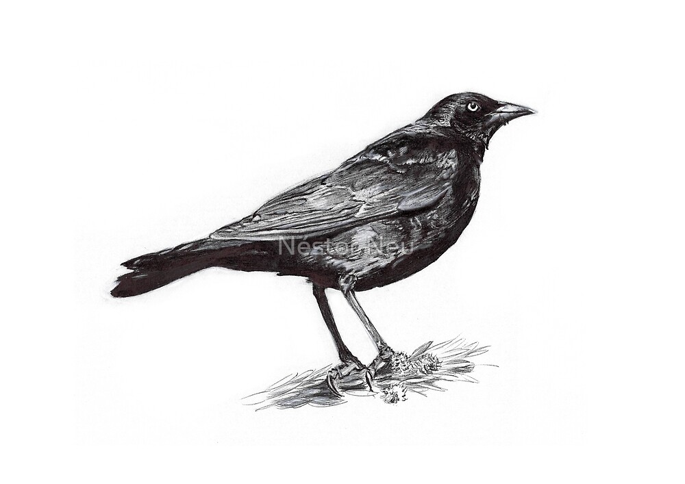 blackbirds drawing - photo #6