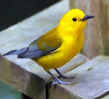 Sherm's Prothonotary Warbler - Painted by Karen  Securius