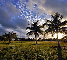 Palms by Dan Bronish
