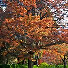 Jewels Of Autumn by Anna Ryan