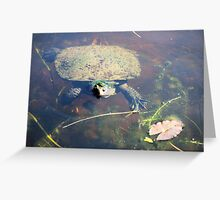 Turtle in the Garden Greeting Card