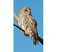 A Barred Owl resting on a Sunny winter's day. Photographic Print