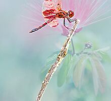 Red Dragonfly by Bonnie T.  Barry