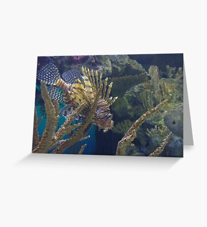Lionfish - coloured Greeting Card