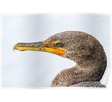 Cormorant head shot Poster