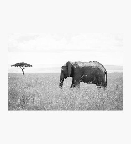 Elephant of Masai Mara Photographic Print