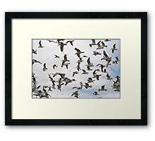 A flock of Seagulls - Yarmouth Nova Scotia Framed Print
