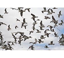 A flock of Seagulls - Yarmouth Nova Scotia Photographic Print
