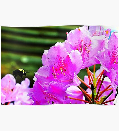 Rhododendron with Bee Poster