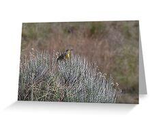 Western Meadowlark on Sage Greeting Card