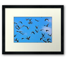"""Genesis 1:20  And God said, """"Let the waters swarm with swarms of living creatures, and let birds fly above the earth across the expanse of the heavens."""" Framed Print"""