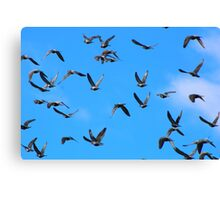 "Genesis 1:20  And God said, ""Let the waters swarm with swarms of living creatures, and let birds fly above the earth across the expanse of the heavens."" Canvas Print"