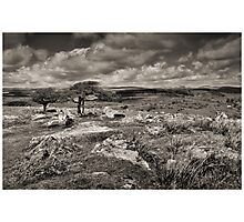 Two Trees at Combestone Tor Photographic Print