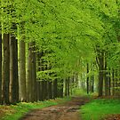 Walking through the spring forest by jchanders
