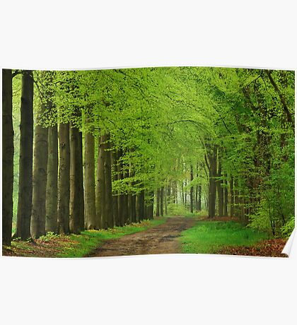 Walking through the spring forest Poster