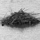 Beaver Lodge by Christine Ford