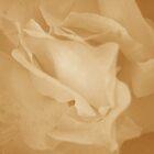 Dancing Petals [Sepia] by peterrobinsonjr