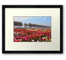 Show Garden Tulip Festival Framed Print