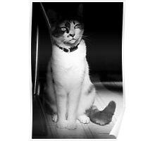 Kaiya, the cat Poster