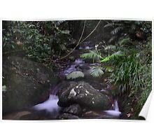 Rainforest Creek QLD Australia Poster