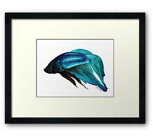 Betta Fish Digital Painting Framed Print