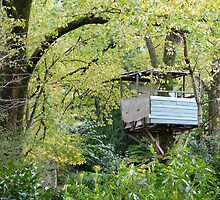 Tree-house at Mt Wilson by PhotosByG