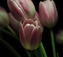 Silky Pink by EbyArts