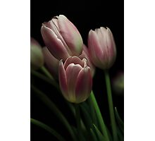 Silky Pink Photographic Print