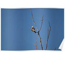 Mississippi Kite Poster