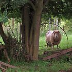 EWE Talkin to Me by Karen Gingell