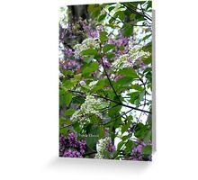 Blackhaw and Redbud Blossoms Mingle in the Morning Breeze. Greeting Card