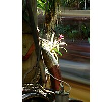 Jungle Flower Photographic Print